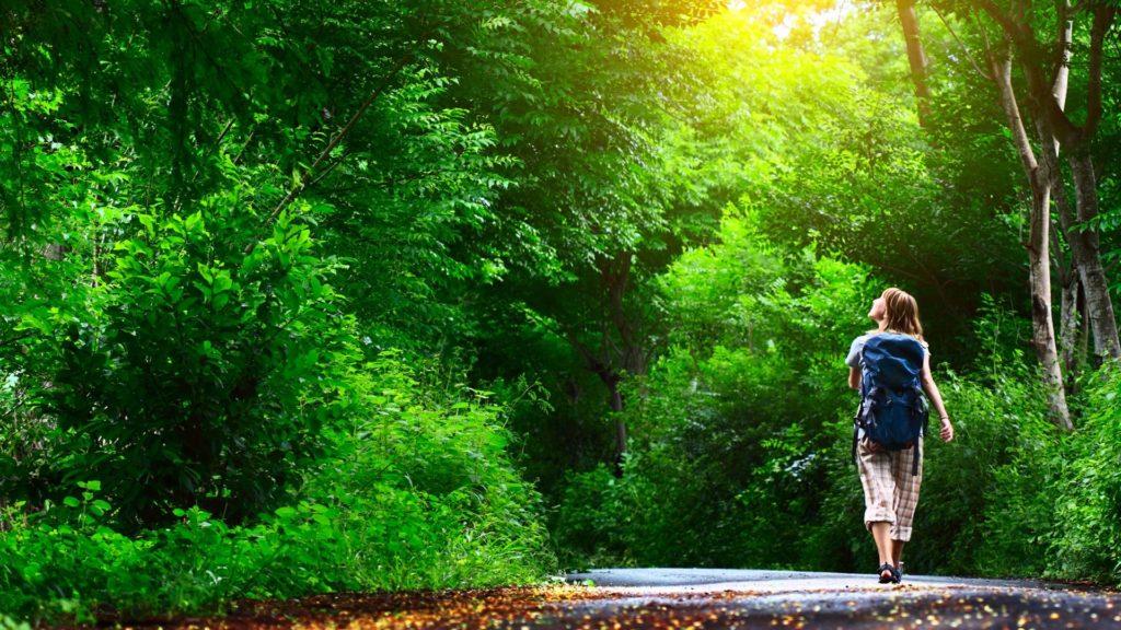 walking park shinrin-yoku