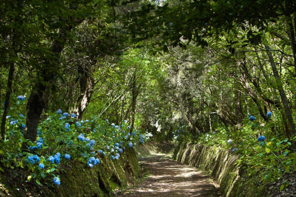 Levada do Caldeirão Verde Madeira