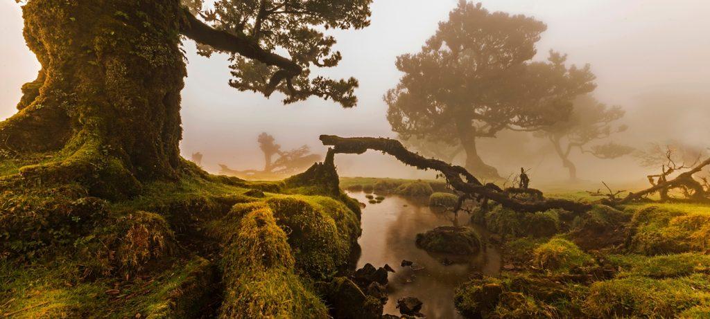 Fanal Madeira nature shinrin-yoku